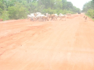 South Bank Rd, The Gambia